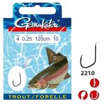 Forelle / Trout